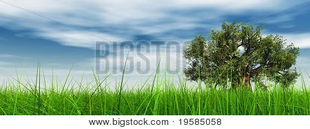 HIGH RESOLUTION 3d green grass over a blue sky banner with white clouds as background and a clear horizon with a natural green but old baobab tree