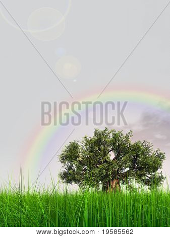 3d green grass over a blue sky with white clouds and a rainbow as background and a clear horizon with a natural green but old baobab tree