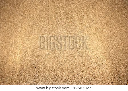 Golden sand background just brushed by a wave