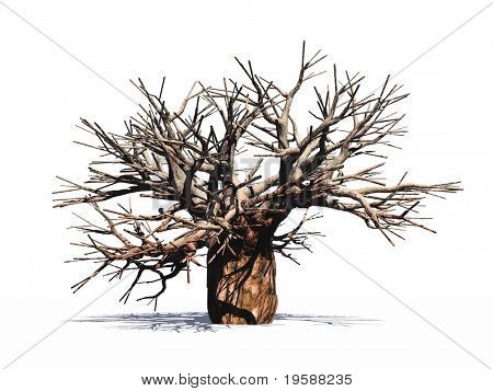 High resolution huge baobab tree isolated on white without leafs