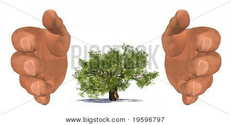 High resolution conceptual tree protected by hands isolated on white