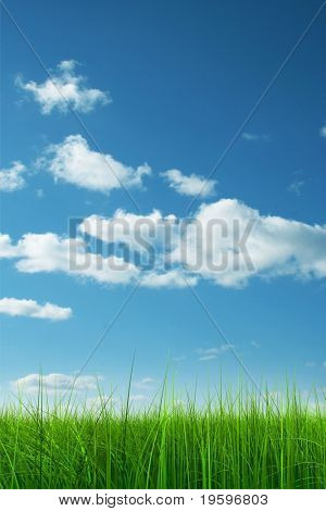 Green grass over a blue sky background