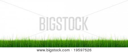 Grama de verde 3d de alta resolução, isolada em um fundo branco