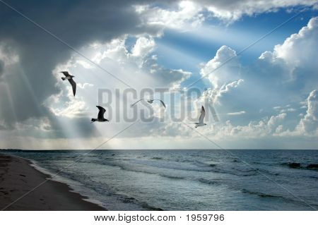 Light And Seagulls