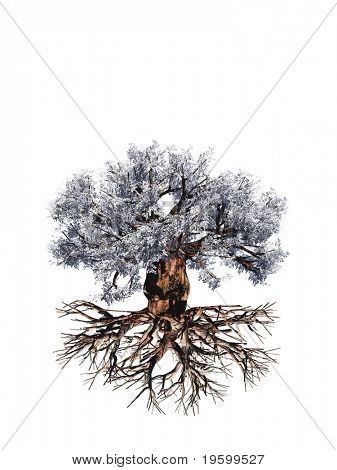 High resolution old baobab tree isolated on white background with roots