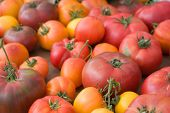 organic heirloom tomatoes - narrow DOF