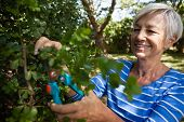 Smiling senior woman trimming plants with pruning shears at backyard poster