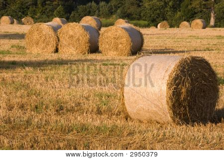 Hayfield At Harvest Ii