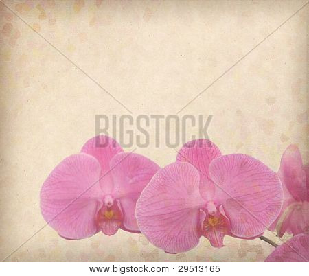 moth orchid design in grunge and retro style