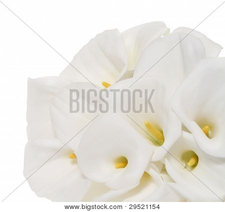 Bunch Of Cala Lilies In High Key