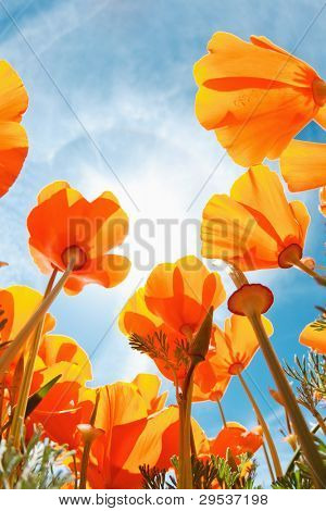 Surgir flores, Macro vista mirando hacia el cielo