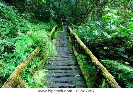 Wood Footpath  .