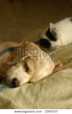 Cat Dog Sleeping