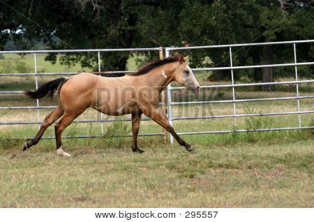 Cantering Colt