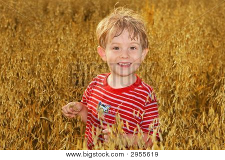 A Boy Standing In A Field Of Oats