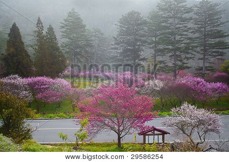 pink flowers blossoming tree branch deep bokeh