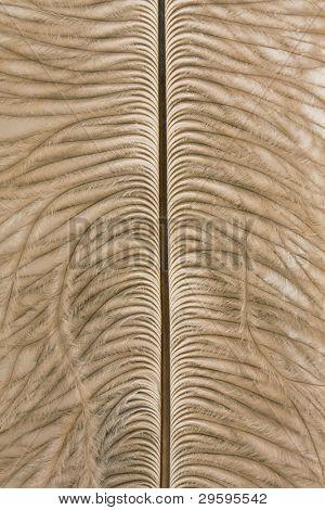 macro de plumas de avestruz para fondo o textura