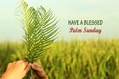 A Young Woman Holding Palm Leaves. Palm Leaves Background. Palm Sunday Concept. Have Blessed Palm Su poster