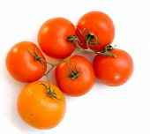 The Tangerine Which Has Grown On A Branch With Tomatoes. poster