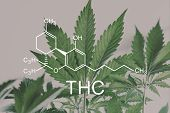 Thc Formula, Tetrahydrocannabinol . Medical Marijuana, Hemp Industry, Despancery Business. Cbd And T poster