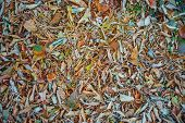 Autumnal Foliage, Background Of Fallen Autumn Leaves, Fallen Leaves poster