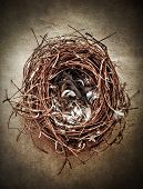 image of bird-nest  - Birds nest with feathers on textured background - JPG