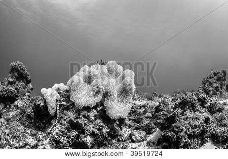 black and white reef scape