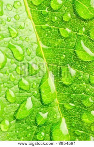 Leaf And Raindrops