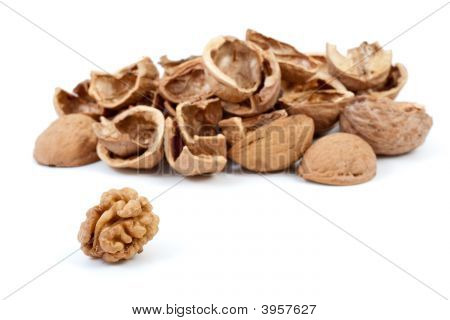 Some Nutshells And Walnut Kernel