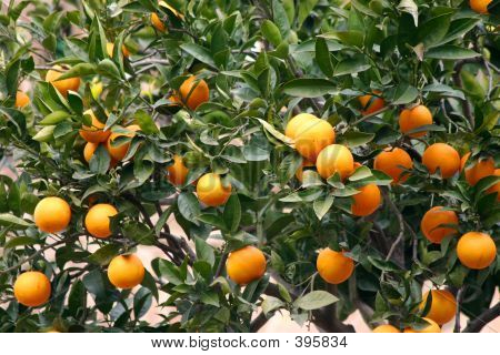 Spanish Oranges