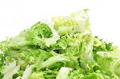 foto of escarole  - some chopped leaves of escarole endive on a white background - JPG