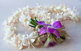 picture of tuberose  - This tropical still life is a Hawaii Lei made of white tuberose flowers a purple orchid and ribbon - JPG