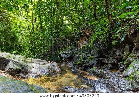 A Small Stream In Tropical Rainforest