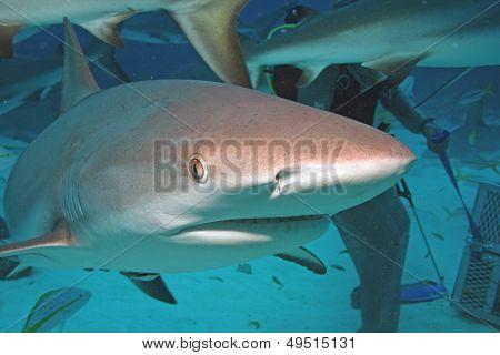 Shark Close-up