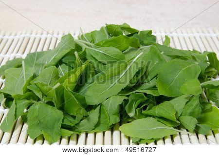Folhas de manjericão fresco