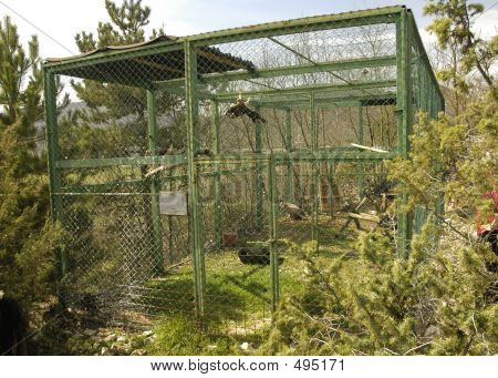 Eagles In Cage
