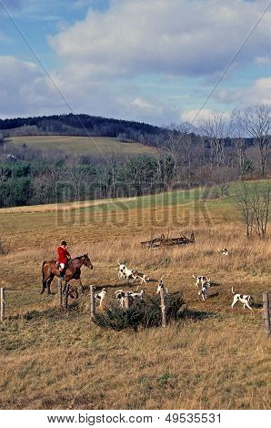 Foxhunting With Hounds