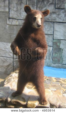 Betteln cub