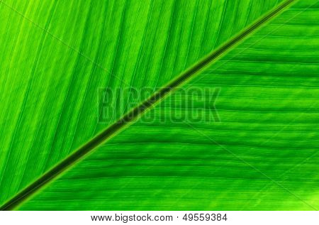 Tropical green leaf details