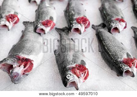 Salmon fish at market