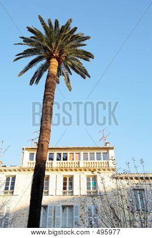 Palma y edificio
