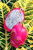 picture of dragon fruit  - Hylocereus undatus is the Pitaya blanca or White - JPG