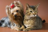 foto of cat dog  - Cat And Puppy In Studio on a neutral background - JPG