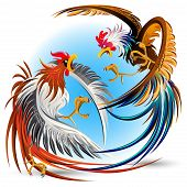 stock photo of fighting-rooster  - Cockfight  - JPG