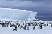 stock photo of iceberg  - Emperor Penguin  - JPG