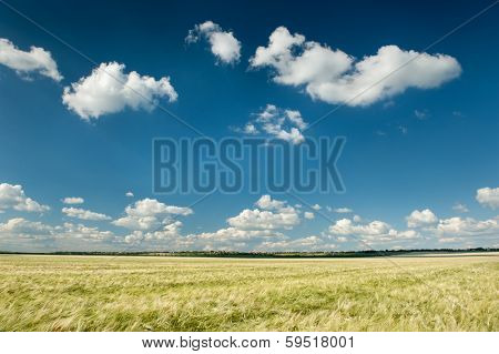 wheat field and blue sky spring landscape
