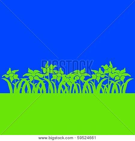 Daffodils On Blue.