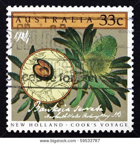 Postage Stamp Australia 1986 Saw Banksia, Banksia Serrata