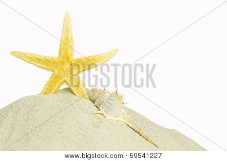 Starfish And Sea Shell Isolated