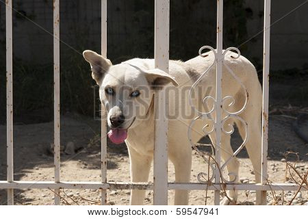 Cute Dog Behind Fence